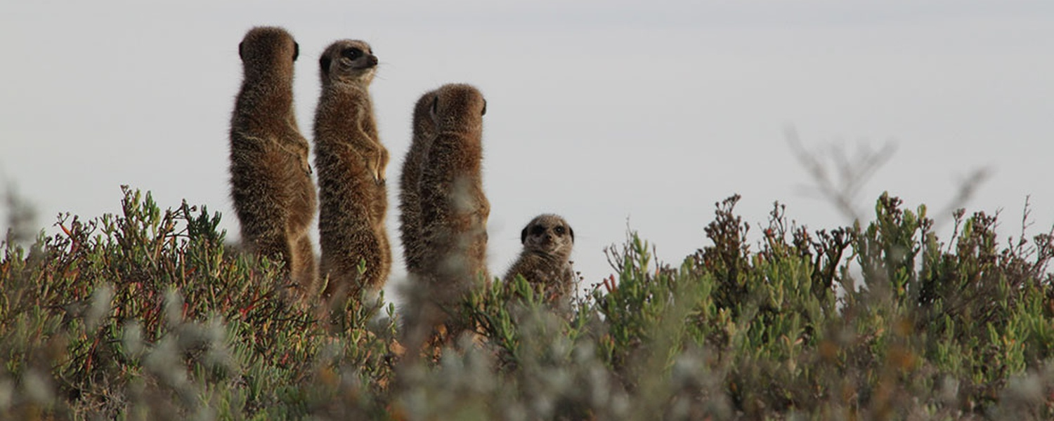 Wild Meerkat Adventure Tours – Original Tours Since 2004!