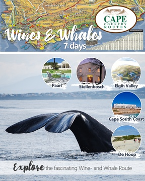 Cape Country Routes - Wines and Whales 7-day Tour Package - Road Trip