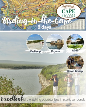 Birding-the-Cape 8-Day Tour Package